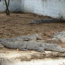 Crocodile Rehab Center