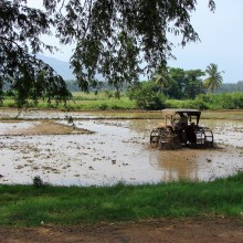 Preparing a paddy field for the next round, after harvesting