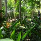Sandakan: interniert und gefoltert in Borneo