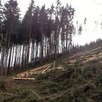 Waldverlust