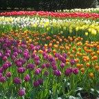 Blumen-Cluster im Hochinzidenz-Land