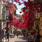 Nafplio: Wo rote Blüten tanzen